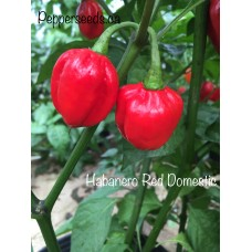 Habanero Red Dommica Pepper Seeds
