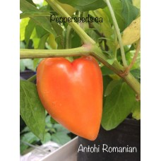 Antohi Romanian Pepper Seeds