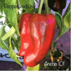 Ancho 101 Pepper Seeds