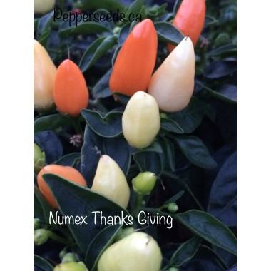 Numex thanks giving