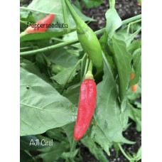 Aji Cirel Pepper Seeds