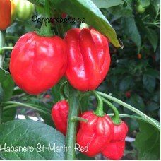 Habanero St-Martin Red Pepper Seeds
