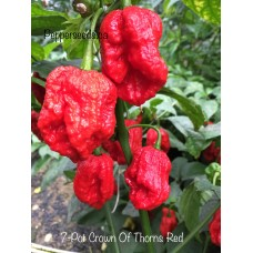 7-Pot Crown Of Thorns Red Pepper Seeds