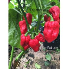 7-Pot Long Red Pepper Seeds