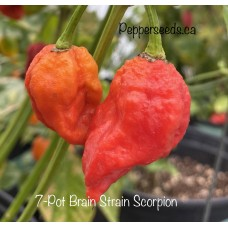 7-Pot Brain Strain Scorpion Pepper Seeds