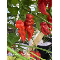 Jays Ghost Red x Jays Ghost Chocolate Pepper Seeds