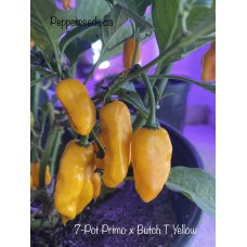 7-Pot Primo x Butch T Yellow Pepper Seeds