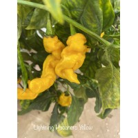 Lightning Habanero Yellow Pepper Seeds