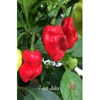 7-pot Julian Pepper Seeds