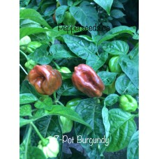 7-Pot Burgundy Pepper Seeds
