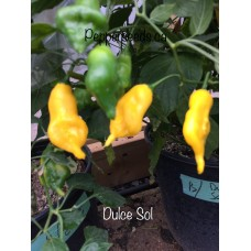 Del Sol Pepper Seeds