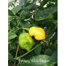 Aji Fantasy Pepper Yellow