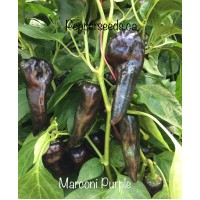 Marconi Purple Pepper Seeds