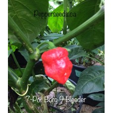 7-Pot Borg 9 Bleeder Red Pepper Seeds