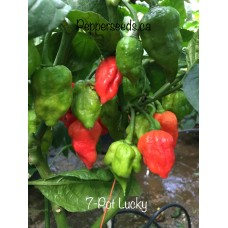 7-Pot Lucky Pepper Seeds