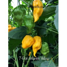 7-Pot Atlantic Yellow Pepper Seeds