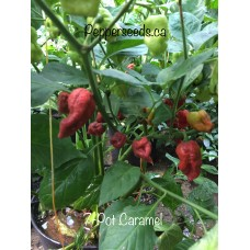 7-Pot Caramel Pepper Seeds