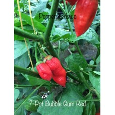 7-Pot Bubble-Gum Pepper Seeds