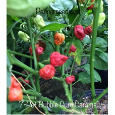 7-Pot Bubble-Gum Caramel Pepper Seeds