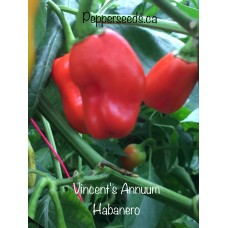 Vincent's Annuum Habanero Pepper Seeds