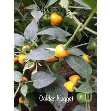 Golden Nugget Pepper Seeds