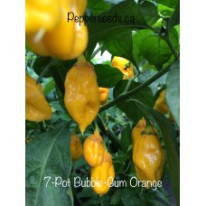 7-Pot Bubble-Gum Orange Pepper Seeds