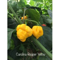 7-Pot Carolina Reaper Yellow Pepper Seeds