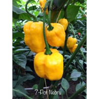 7-Pot Nebru Pepper Seeds