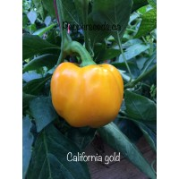 California Wonder Gold Bell Pepper