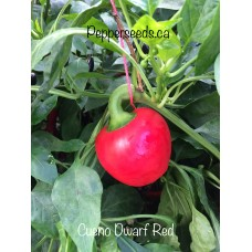 Cueno Dwarf Red Pepper Seeds