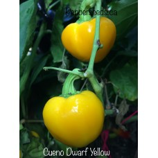 Cueno Dwarf Yellow Pepper Seeds