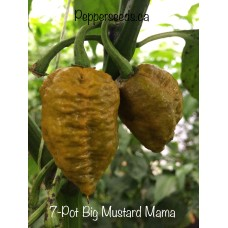 7-Pot Big Mustard Mama Pepper Seeds
