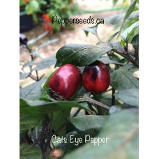 Cats Eye Pepper Seeds