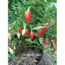 Amachito Red Pepper