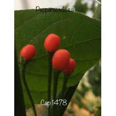 Cap 1478 Pepper