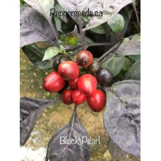 Black Pearl Pepper