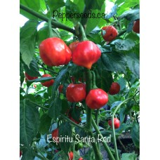 Espiritu Santa Red Pepper Seeds