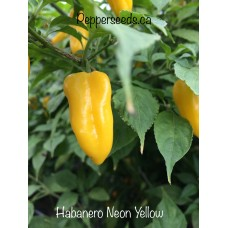 Habanero Neon Yellow