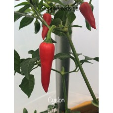 Cyclon Pepper Seeds