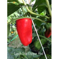 Lunch Box Pepper Red