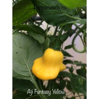 Aji Fantasy Yellow Pepper Seeds