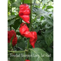 Trinidad Scorpion Red Long Tail