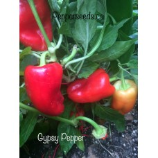 Gypsy Pepper Seeds