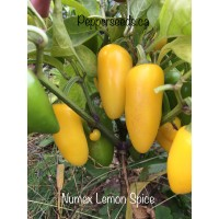 Numex Lemon Spice
