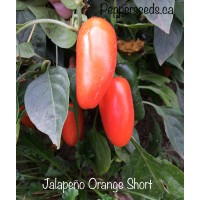Jalapeño Orange Short