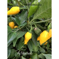 Aji Mochero Pepper