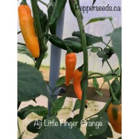 Aji Little Finger Orange Pepper