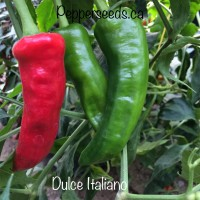 Dulce Italiano Pepper Seeds
