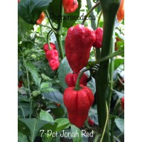 7-Pot Jonah Strain Red Pepper
