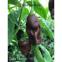 Dulce Morron Pepper Seeds